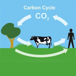 Carbon Dioxide (CO2)